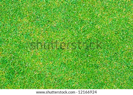 Close Up Of Golf Putting Grass With Tiny Pellets Of Fertilizer ...