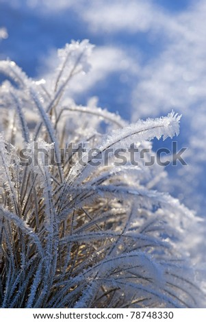 close up of grass with rime frost in winter