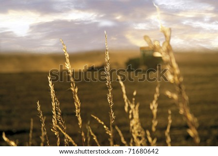 Close up of grass with tractor plowing a field in background
