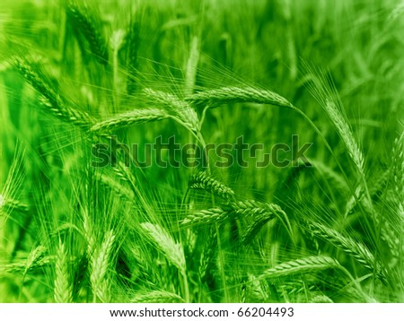 Close-up of green agricultural field
