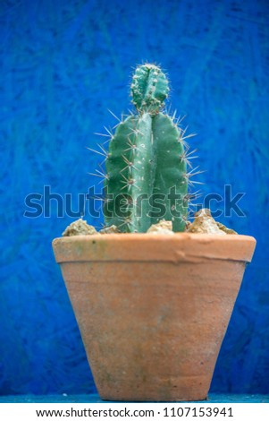 Close up of green cactus
