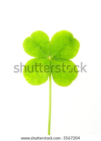 Close-up of green clover leaf against white background