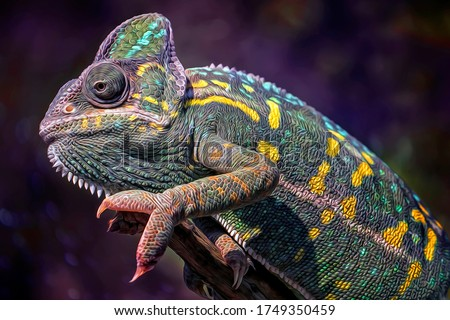 Close up of Green Common Chameleon - Oil Painting Art Nature Illustration