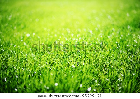 Close up of green grass with focus point.