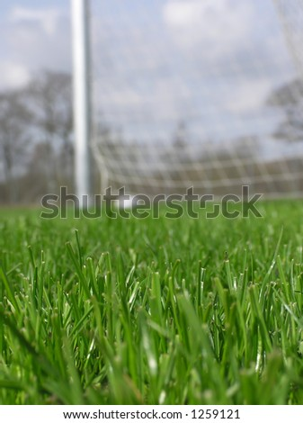 Close-up of green grass with soccer net in the background on a summer day in the park