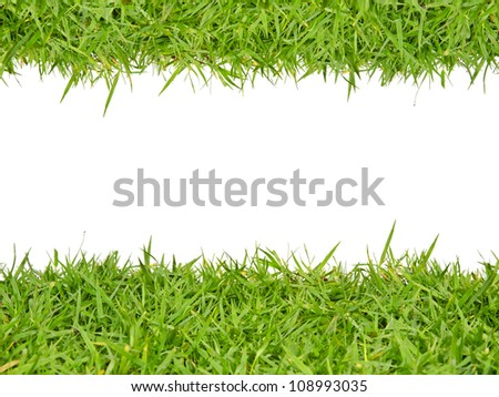 Close-up of green grass with white background