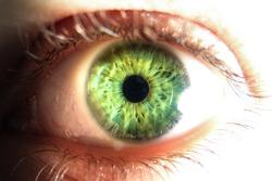 Close-up of green human eye