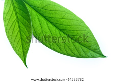 Close-up of green leaf