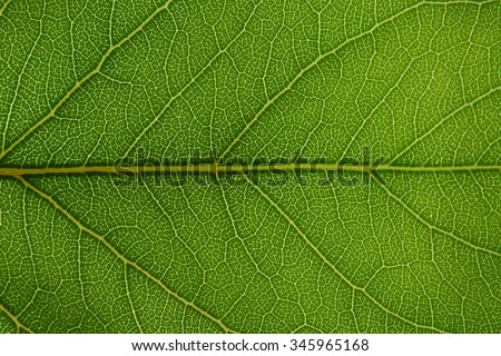 close up of green leaf texture #345965168