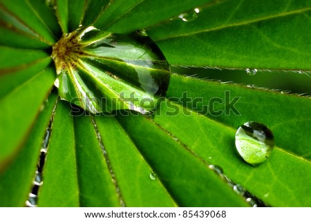 Close up of green leaf with drops of water.