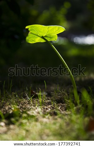 Close up of green leave in forest