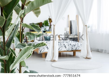 Close-up of green leaves of a tree in bright bedroom interior with round rug and white marquees covering the bed in the background #777851674
