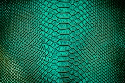 Close up of green Luxury snake skin texture use for background