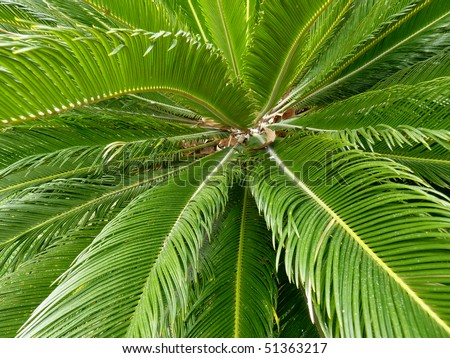 Close up of green palm tree leaves - stock photo