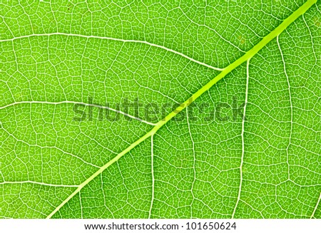 Close-up of green plant leaf texture