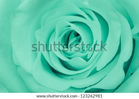 close up of green rose petals