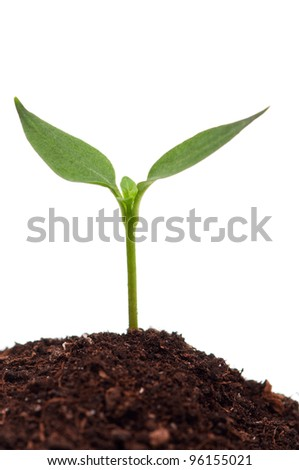 Close-up of green seedling growing out of soil isolated on white background