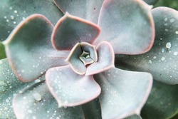 close up of green succulent plant
