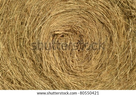 Close up of ground. Texture of straw.