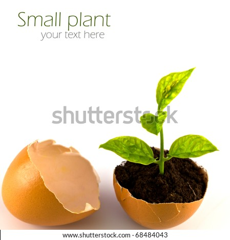 Close up of growing green plant in egg shell on white background.