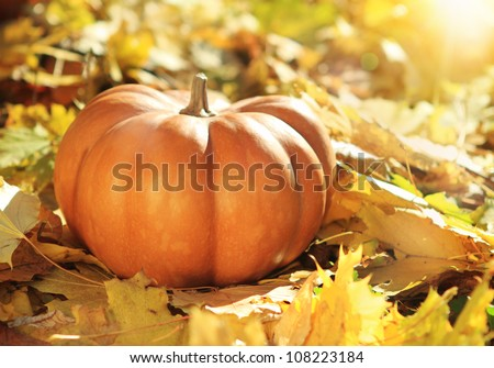Close up of halloween pumpkin on leaves in woods