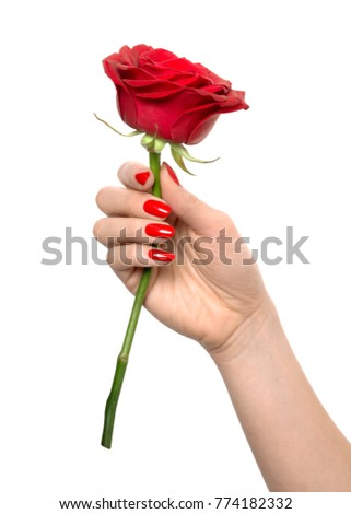close-up of hand with red nail polish holding a red rose #774182332
