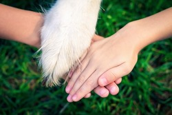 Close up of hands of children and paw of dog bond together against background of blurred green grass. Concept of children's love for pet and friendship. Animal Protection Day. Toned image.