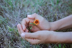 Close-up of hands tenderly holding one wild flower against a beautiful blurred field background. Concept of care, gifts and gesture.