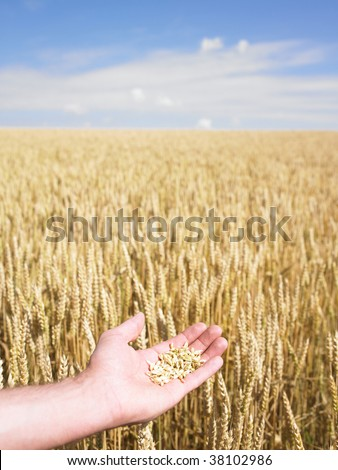 Close-up of hands touching wheat over field