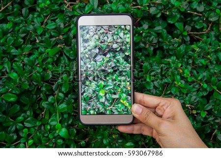 Close up of hands using cell phone,shoot nature #593067986