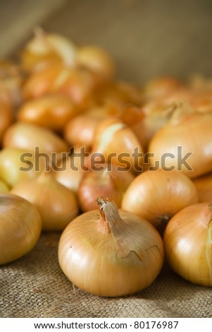 Close up of harvested onion on sacking - stock photo
