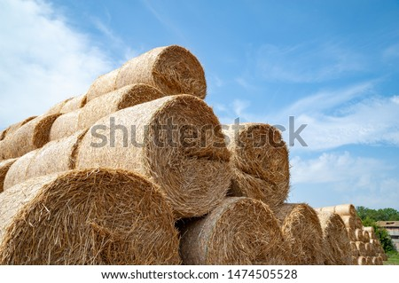 Close-up of hay bales on a sky background. Hay bales are stacked in large stacks. Harvesting in agriculture. #1474505528