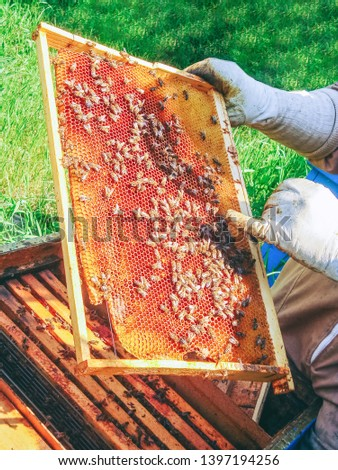 Close up of honey bees (Apis mellifica) clustered on a wooden frame, showing open wax comb full and glistening with nectar.