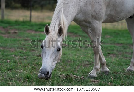 Stock Photo Close-up of horse eating green grass in park