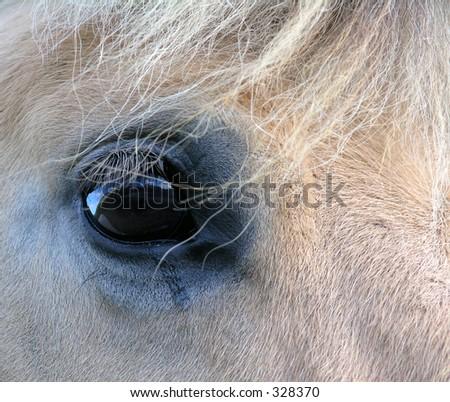 Close-up of horse eye.