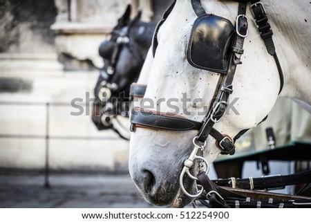 Close up of horse heads of a Fiaker in Vienna, Austria #512254900