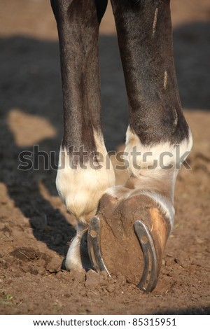 Close up of horse hoof with horseshoe