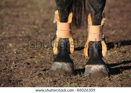 Close up of horse legs with boots for protection