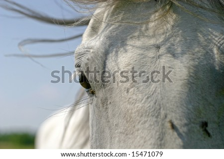 close up of horses eye #15471079