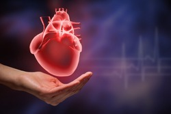 Close up of human hands holding human heart