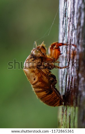 Close up of insect exoskeleton on wood post