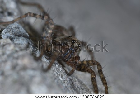 Close up of insect jumping spider