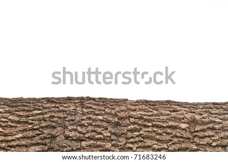 Close-up of Isolated stump/ stub with wooden crust texture