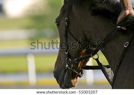 Close-up of Jockeys racing thoroughbreds at an early morning practice
