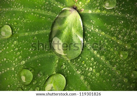 close up of leaf and water droplets