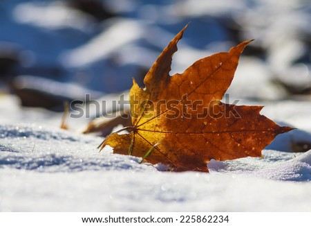 Close-up of  leaf on the first snow in bright sunshine. Park in Autumn.