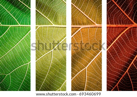 Close up of leaf texture background. concept of season change.   #693460699