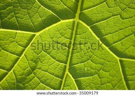 Leaf Patterns | Leaf Guide