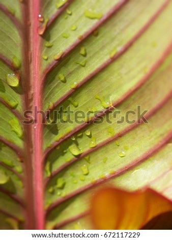 close up of leaves #672117229