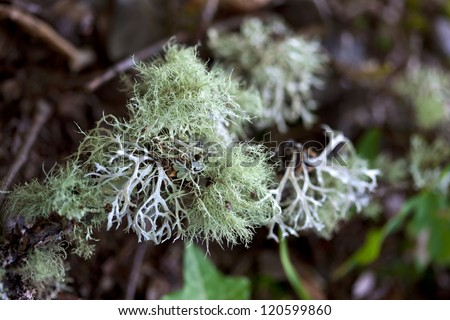 Close-up of lichen in a garden